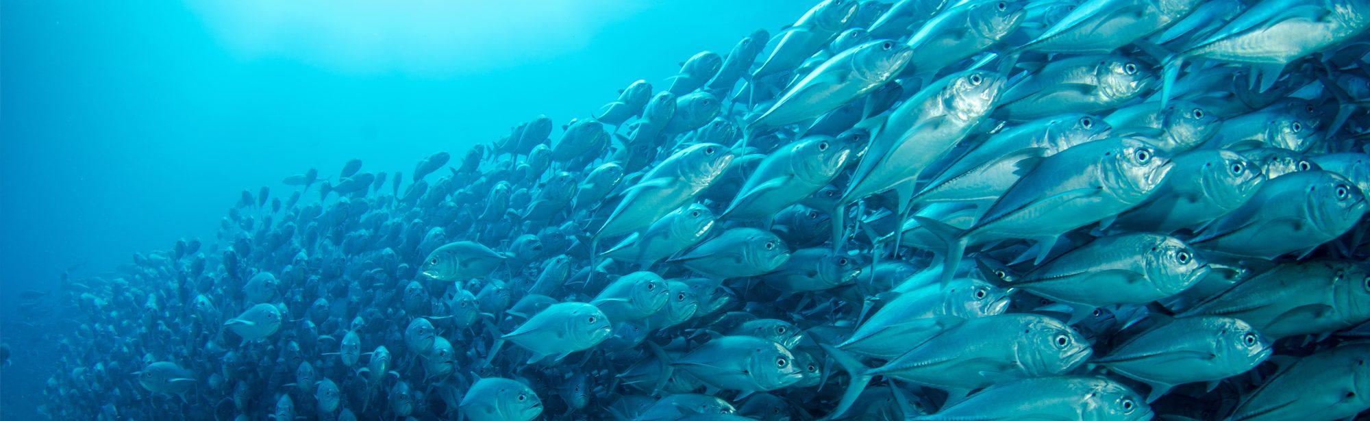 Malaysia Aquaculture