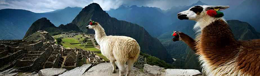 Photo of Lamas in Macchu Picchu